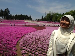Hamparan bunga yang seperti karpet berwarna pink